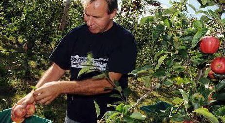 яблучний спас традиції та історія