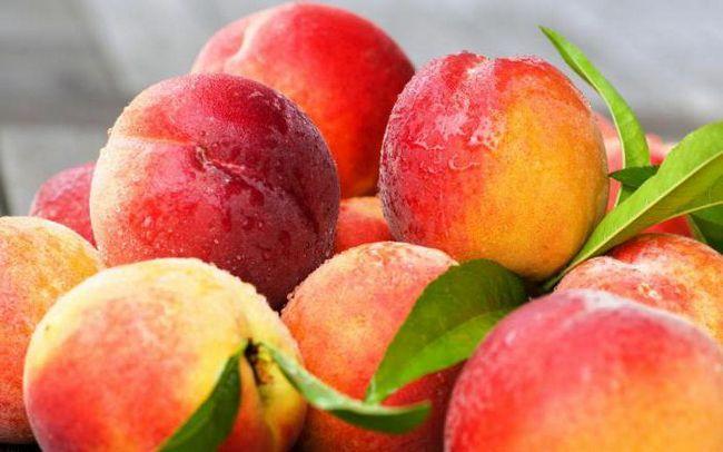Фото - До чого сняться персики на дереві? До чого сниться збирати персики? До чого сниться їсти персик?