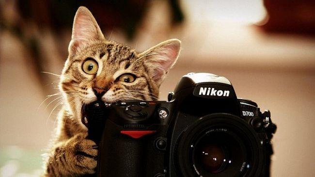 Фото - Чому фотографи - виключно привабливі люди: 5 причин
