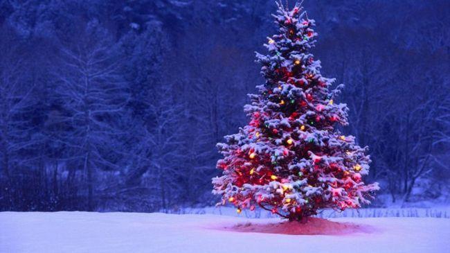 Різдвяне дерево