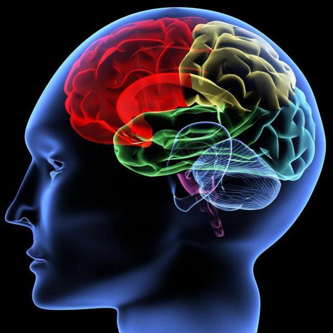Фото - 20 Дивовижних фактів про мозок людини