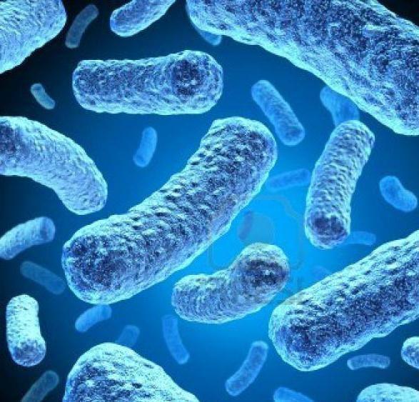 Фото - Біологічне різноманіття: які організми відносяться до прокаріотів?