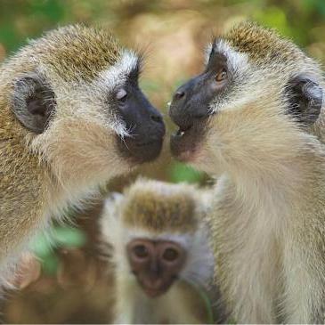 Фото - Що таке етологія тварин? Що вивчає наука етологія?