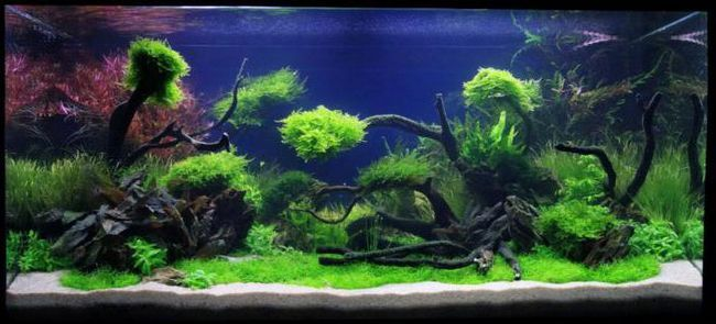 Фото - Декорація для акваріума: використання природних матеріалів і правила їх підготовки