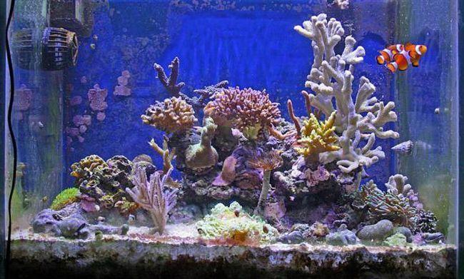 зробити декорації в акваріум