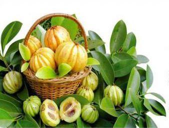 гарцинія камбоджійська для схуднення