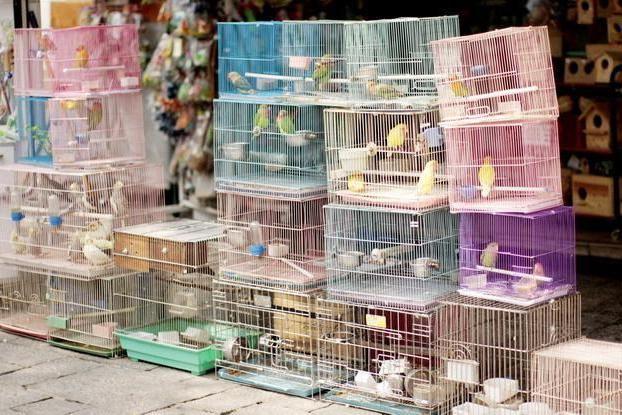 Пташиний ринок в Єкатеринбурзі