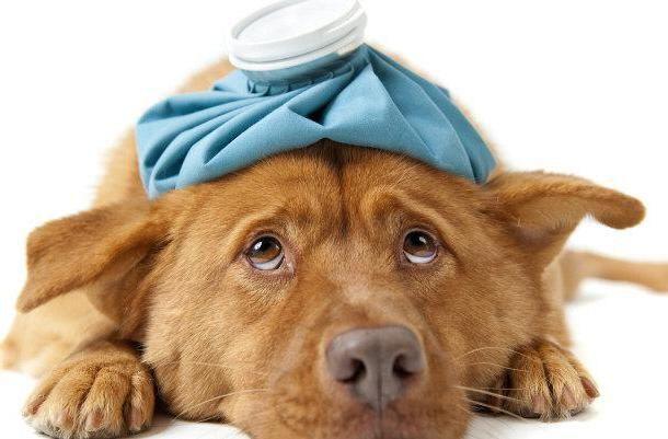 Фото - Де знаходяться ветеринарні клініки в Тюмені?