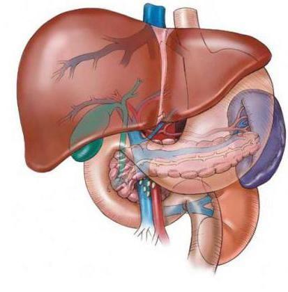 Фото - Гепатобіліарна система. Захворювання гепатобіліарної системи