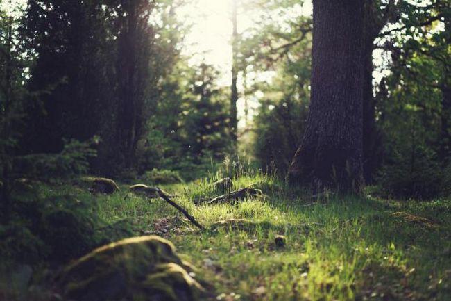 Фото - Хочете покращити розумові здібності? Гуляйте в лісі!