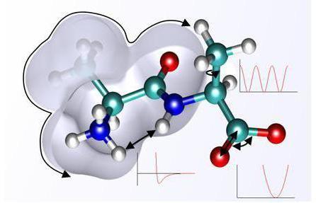 Фото - Енергетична функція білків: приклади та опис. Які білки і де здійснюють енергетичну функцію?