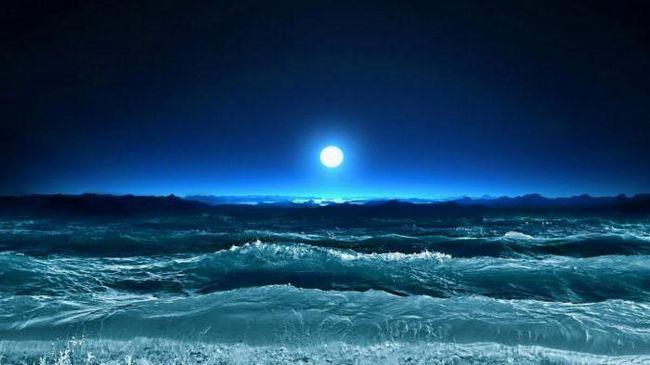 сонник хвиля величезна