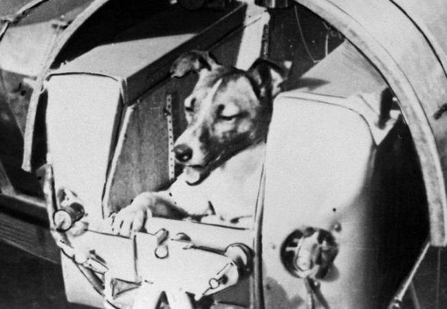 перший собака космонавт лайка