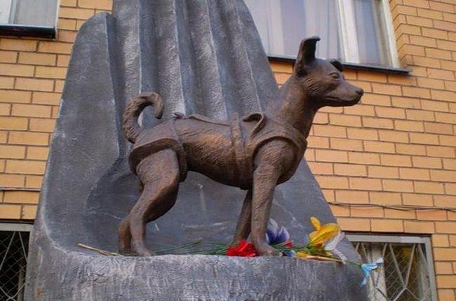 лайка собака космонавт фото