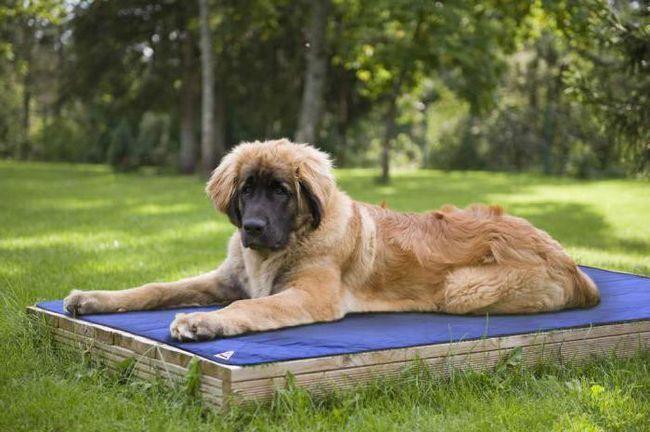 як охолодити собаку в сильну спеку