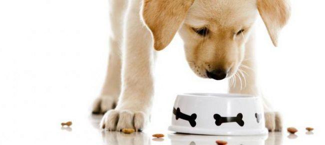 Фото - Як вибрати корм для цуценят: відгуки, поради собаківників