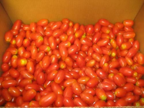 Фото - Як закрити помідори на зиму з виноградом?