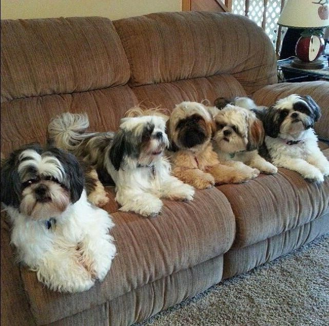 Фото - Які вибрати вітаміни для собак (для вовни)?
