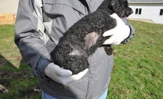 вітаміни для собак для шерсті і шкіри