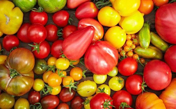 яку температуру витримує розсада помідор