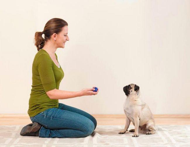 Фото - Клікер для собак: застосування під час дресирування. Відгуки власників