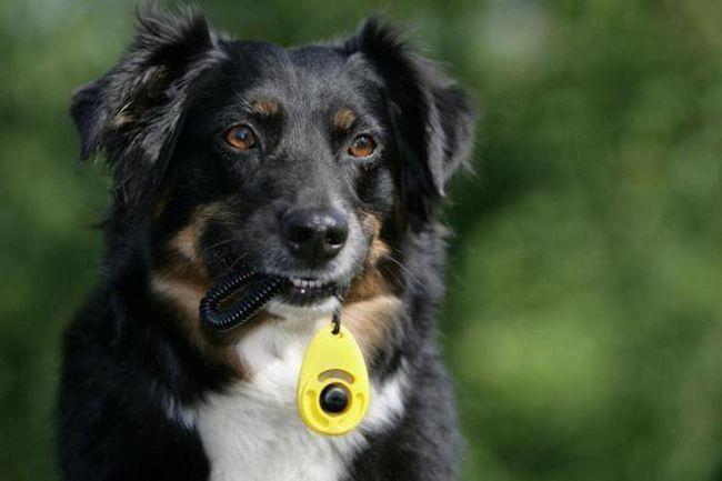 клікер для дресирування собак