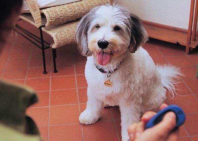 клікер для собак своїми руками