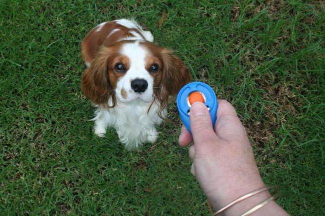 клікер для собак відгуки