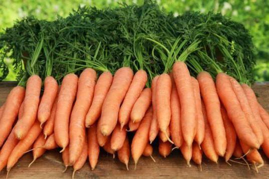коли потрібно прибирати морква з грядки