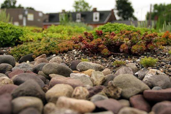 Фото - Компоненти екосистеми. Приклад зв'язку живої та неживої природи.
