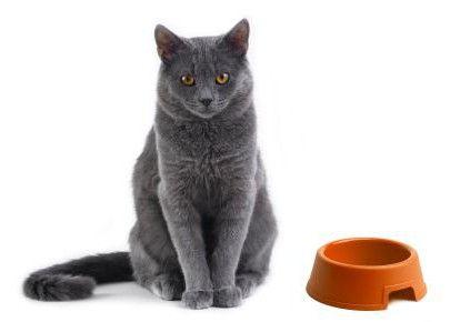 Фото - Корм для кішок