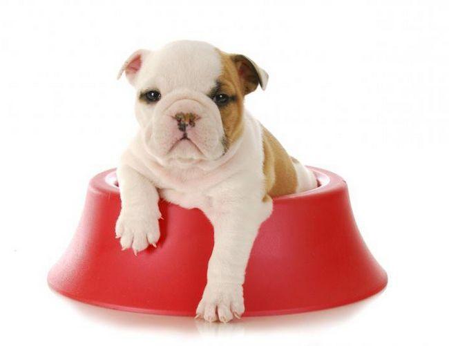 корм Ориджа для собак відгуки ветеринарів