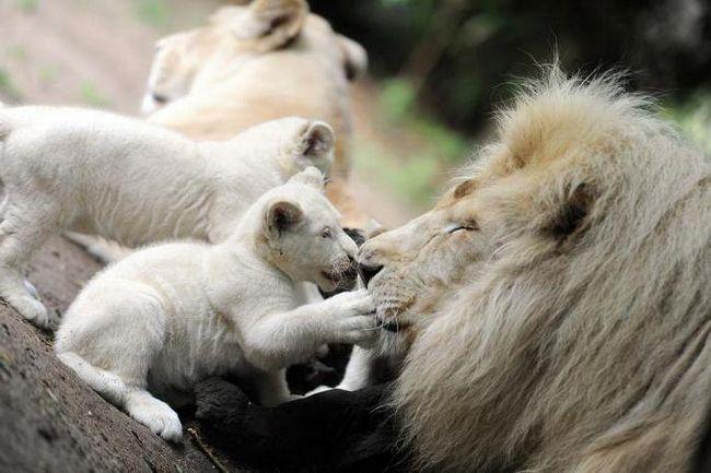 белогорск крим зоопарк