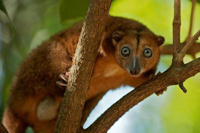 Фото - Міжнародна червона книга: тварини. Хто веде міжнародну червону книгу?