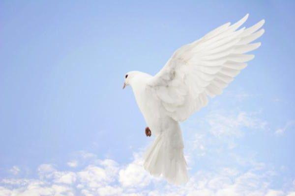 Фото - Міжнародний день миру. Що це за дивне свято?