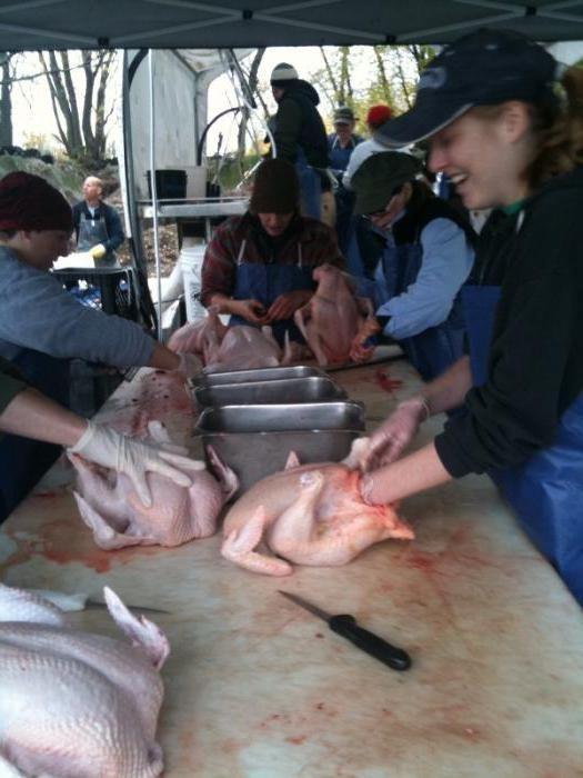 Фото - М'ясо: переробка. Обладнання для переробки м'яса, птиці. Виробництво, зберігання та переробка м'яса
