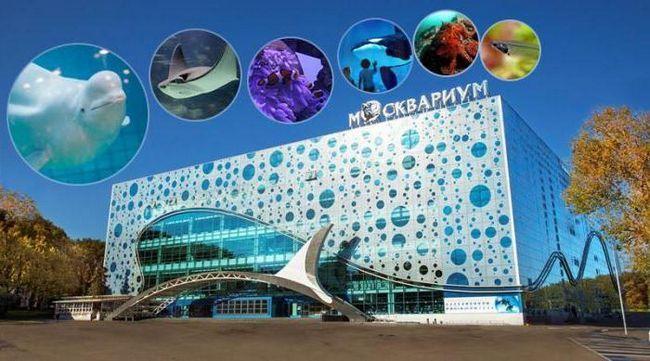Фото - Московський океанаріум на вднх: опис, графік роботи і відгуки відвідувачів