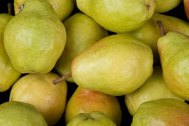 Фото - Опис сорти груші Велеса. Груша Велеса: відгуки садівників