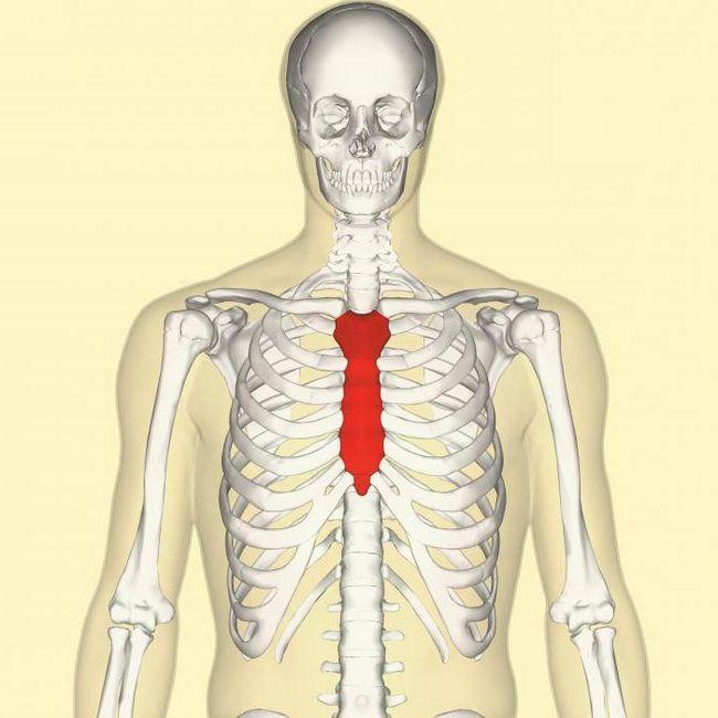 скелет людини осьовий скелет