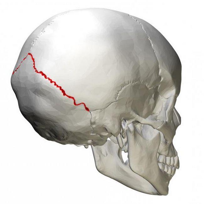 кістка осьового скелета