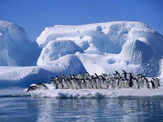 Фото - Першовідкривачі Антарктиди. Беллінсгаузен Фадей Фадейович. Лазарєв Михайло Петрович. Хто відкрив Антарктиду?