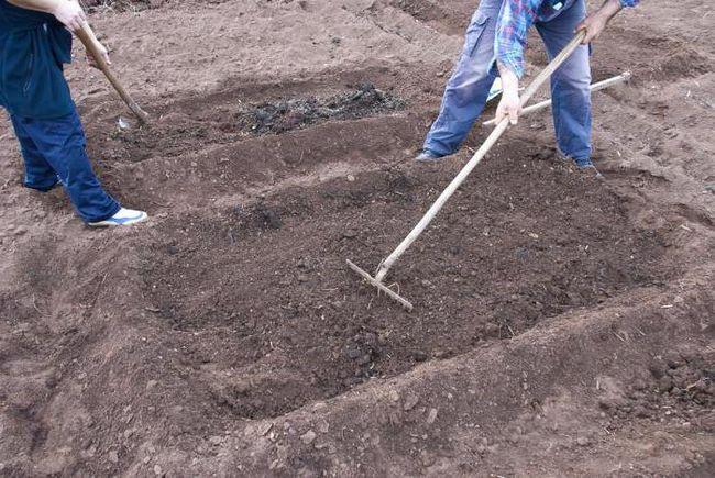 Фото - Грунт: підготовка для посадки овочевих і ягідних культур. Підготовка грунту восени