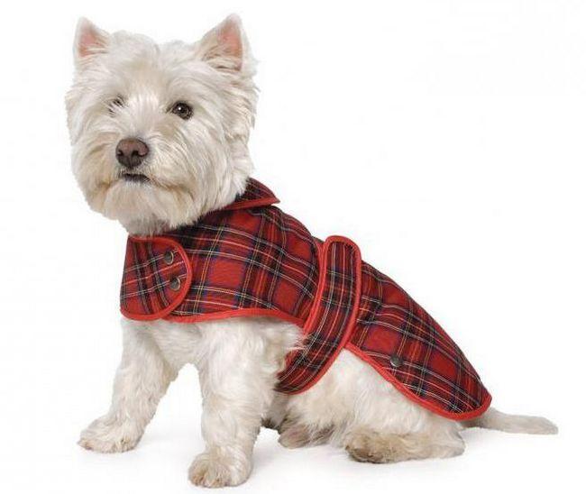 Фото - Попона для собак: види, призначення, виготовлення своїми руками
