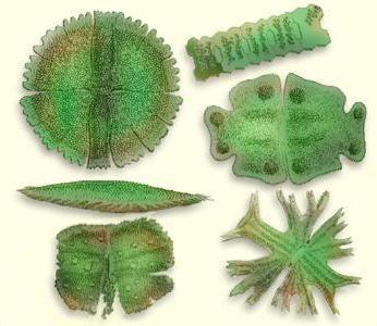класифікації мікроорганізмів