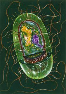 морфологія і класифікація мікроорганізмів