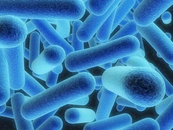 Фото - Принципи класифікації мікроорганізмів