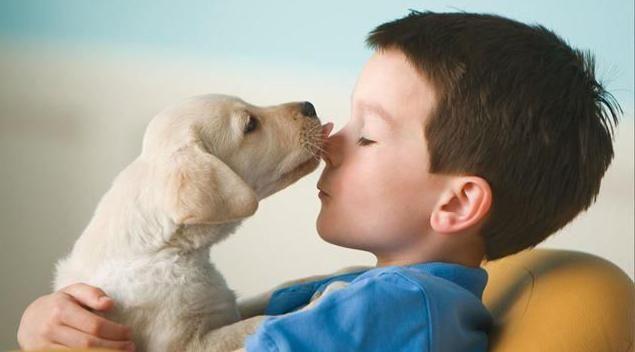 щеплення собакам за віком таблиця чихуахуа