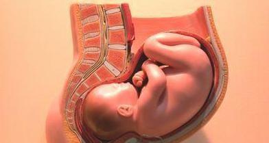 Фото - Розміри і вага плоду в 30 тижнів вагітності: норма (таблиця)
