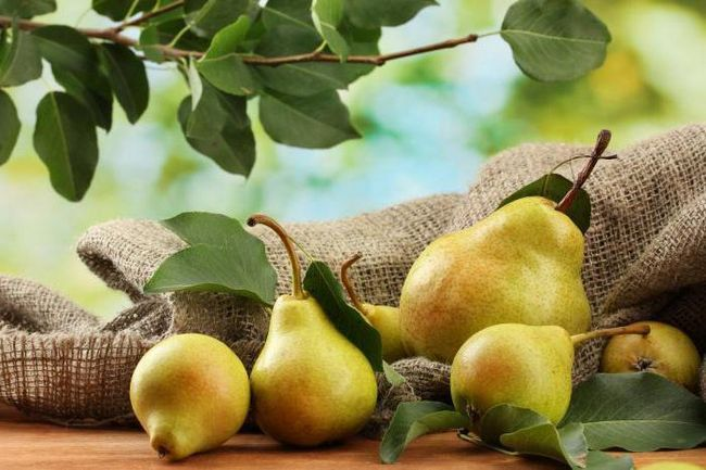 Фото - Самогон з груш. Кілька рецептів браги