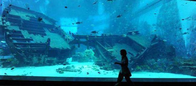 Фото - Найбільший океанаріум в світі: розміри, особливості
